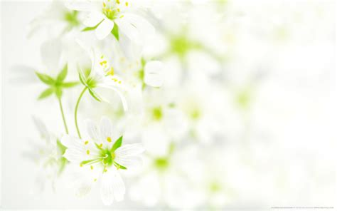wallpaper with flowers flowers background wallpaper 2560x1600 30119