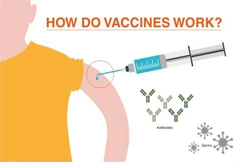 how work hilleman laboratories how do vaccines work