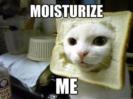 Bread Cat Meme - moisturise me cassandra doctor who pinterest cats