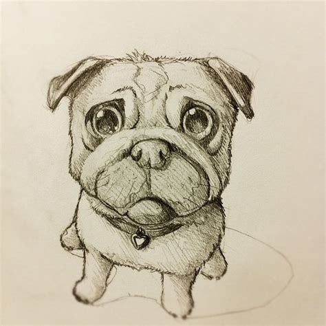 sketch of a pug like the puppy drawing illustration sketch puppy pug khuon webstagram