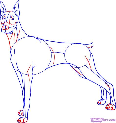 how to doberman how to draw a doberman step by step pets animals free drawing tutorial