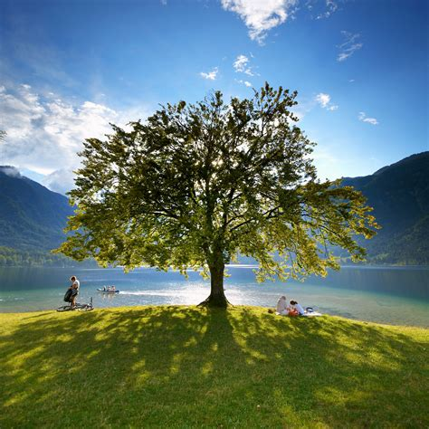 environmentally friendly trees slovenia celebrated the earth day on april 22nd as the 5th most environmentally friendly country