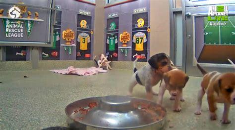 puppy bowl locker room the puppy bowl kicks on animal planet this february petslady