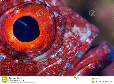 L Eye Fish by Closeup Of A Fish Eye Stock Photo Image Of Closeup