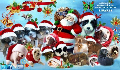 feliz navidad papa imagenes feliz navidad angeles