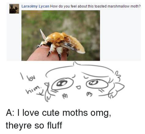 Moth Meme - 25 best memes about cute moth cute moth memes