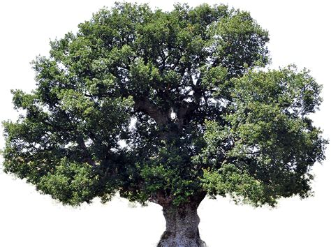 tree pic tree clipart