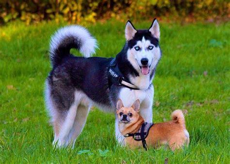 perros todas clases todas las razas de perros im 225 genes caracter 237 sticas y