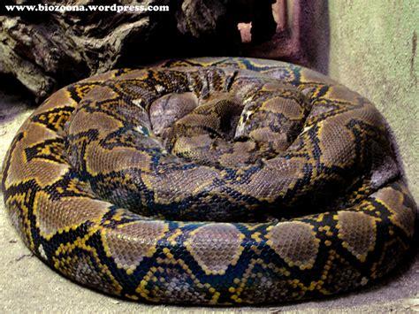 imagenes animales que se arrastran reptiles la biozoona