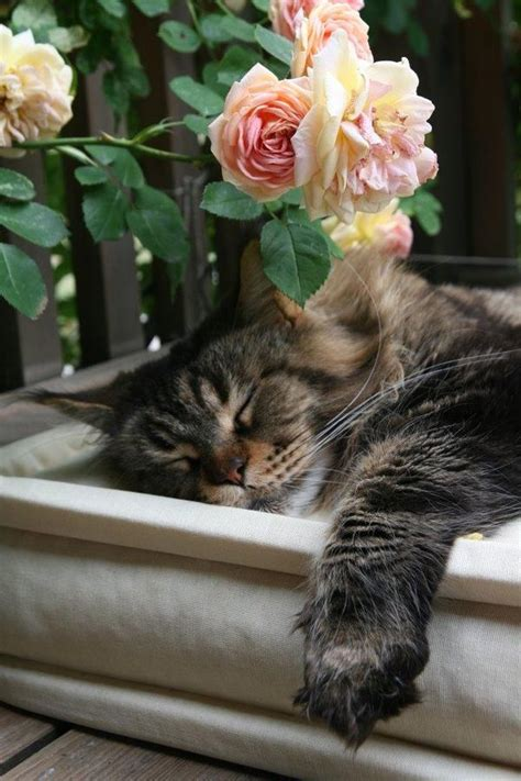 Cottage Cats sweet cottage cat