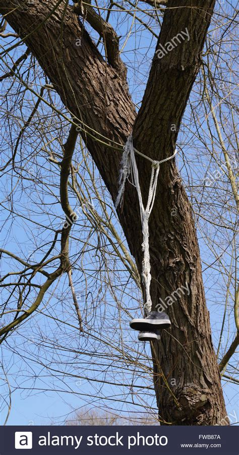 suspended tree trainers thrown up and suspended from tree branches stock