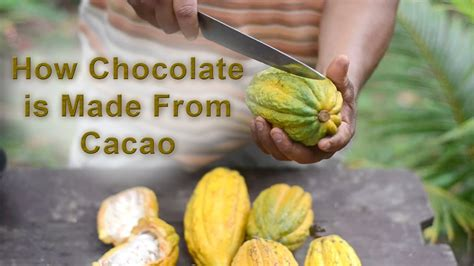 How Is A Made by Lesson How Chocolate Is Made From Cacao Understory