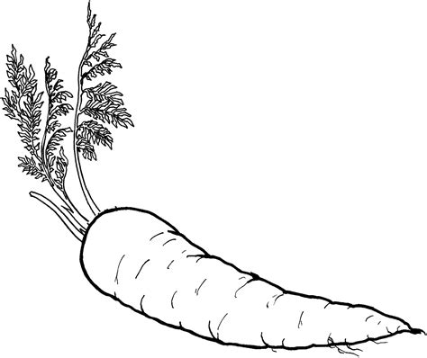 what is food coloring healthy food coloring pages food of carrot vegetable
