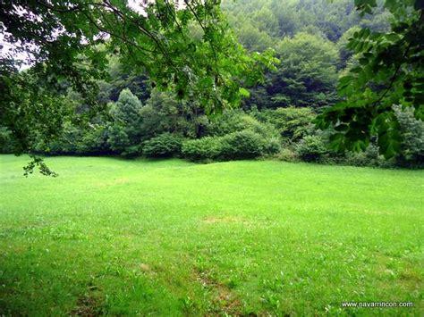 imagenes de verdes praderas plazaola