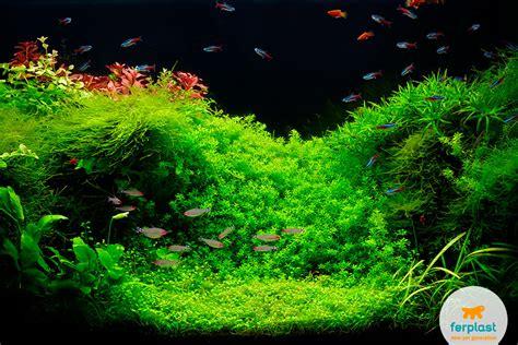neon illuminazione illuminazione dell acquario neon o led ferplast