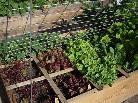 raised bed vegetable gardening 1000 images about projects to try on pinterest gardens