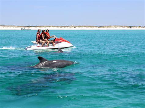 boat rentals in panama city beach panama city beach dolphin tours boat rentals 850 238 2484