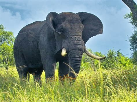 elephant wallpaper for pc elephant wallpapers free elephant wallpapers hd
