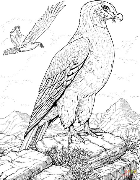 coloring page falcon bird hawk prey bird coloring page free printable coloring pages
