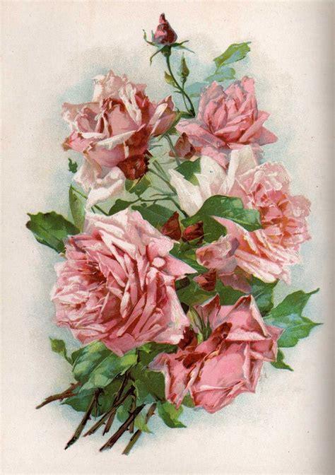 vintage roses beautiful varieties 1910496901 2494 best brocante rozen images on catherine klein vintage floral and vintage flowers