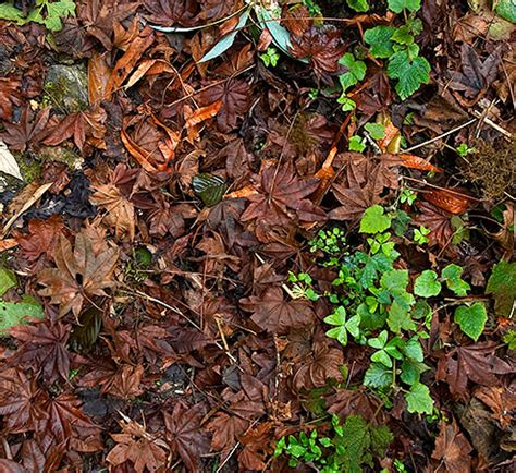 Forest Floor by Forest Floor Www Pixshark Images Galleries With A