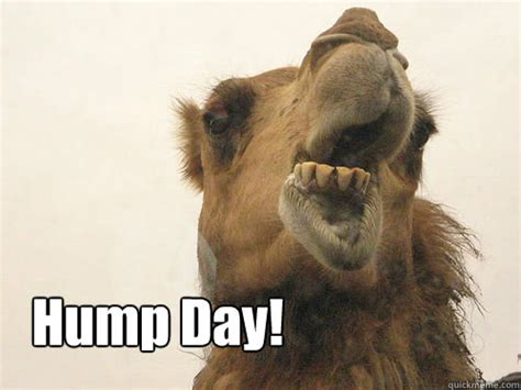 Camel Hump Day Meme - hump day meme camel www imgkid com the image kid has it