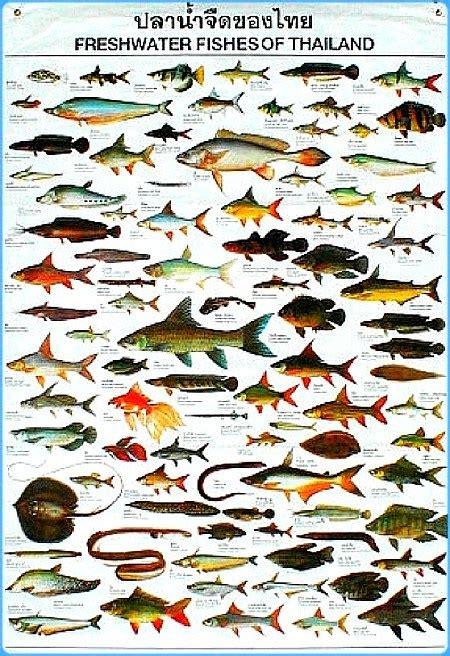 Ikan Discus White Uk 2 aquarium fish types names all types of aquarium fish