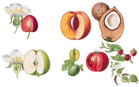Encyclop 233 Die Larousse En Ligne Fruit Latin Fructus Fraise Dessin Fraise Avec Des Fleurs L