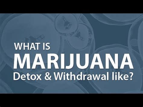 What Is Detox Like by What Is Marijuana Detox Withdrawal Like