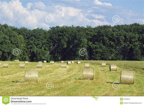 farm hay bale landscape royalty free stock images image