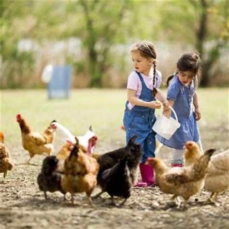 Backyard Chickens Feeding Best 25 Farm Ideas On Country