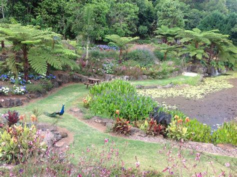 Maleny Botanic Garden Things To Do Around Nambour In May Motel In Nambour
