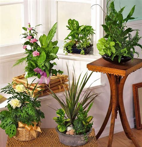 indoor plant arrangements the easiest indoor plants to grow in house artdreamshome