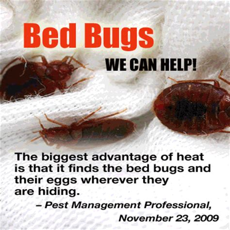 bed bug exterminator denver cimex technologies bed bugs boulder denver bed bug