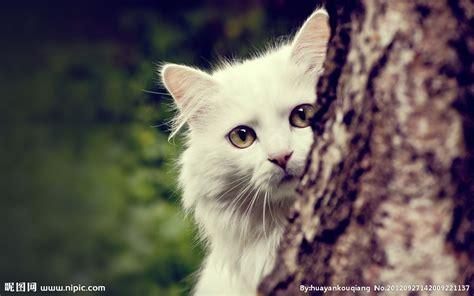 cat wallpaper vertical 猫咪老师图片 动漫猫咪图片 可爱猫咪图片 搜奇新闻网