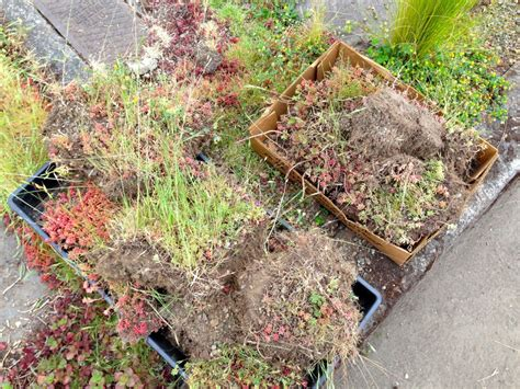 Puzzle Working A Garden Plant Lust Rock Garden Plant Crossword Clue