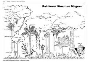 Rainforest Tree Template by Rainforest Layer Diagram Habitat Lesson Plans