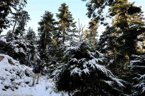 winter hütte westweg winter wanderung etappe 3 forbach nach unterstmatt