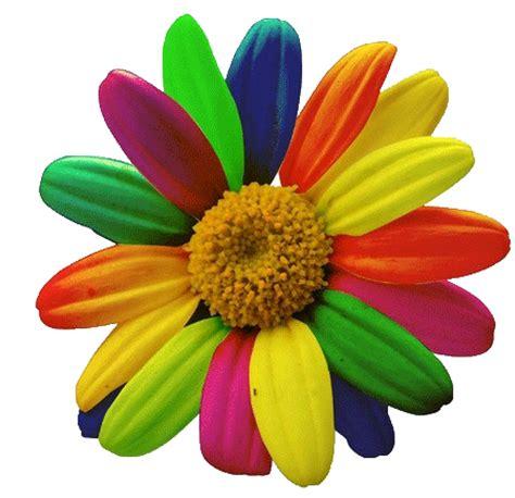 www fiore la casa di margherita