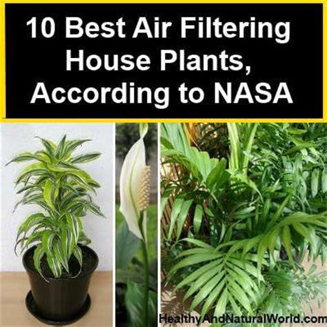 house plants plants  nasa  pinterest