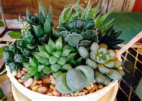 low light succulents succulents for interior