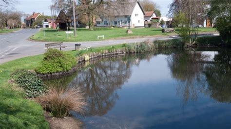 ponds  wildlife trusts