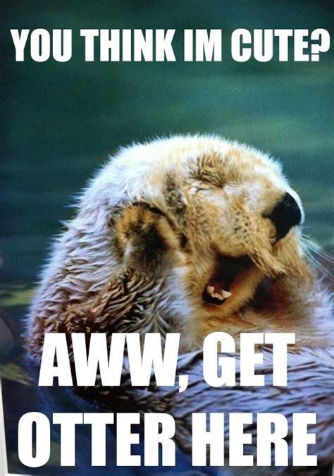 Otter Memes - otter meme tumblr