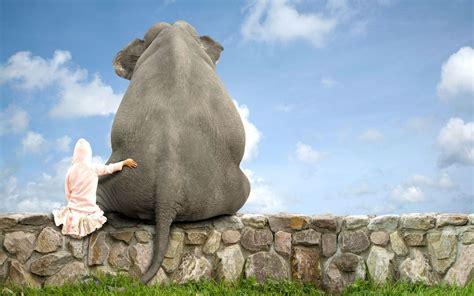 wallpaper desktop elephant elephant desktop wallpapers wallpaper cave