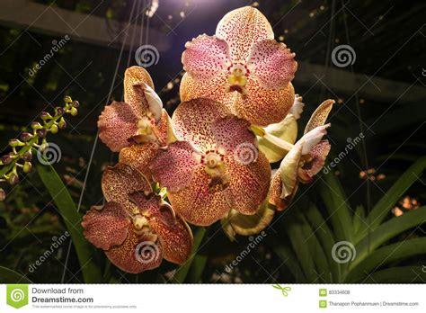 al fiore luce splende gi 249 al fiore marrone rosso dell
