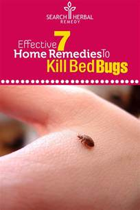 how to bed bugs home remedies home remedies to bed bugs treatments cure