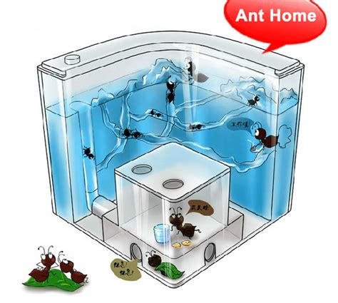 free shipping novelty ant home ant villa ant farm