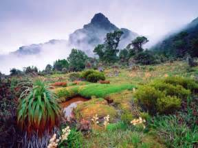 Winter Climbing Plants - trek tasmania mt anne circuit walking tours