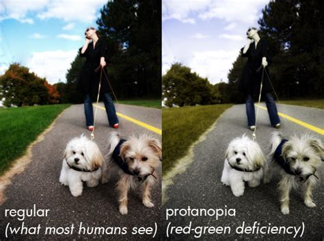 do dogs see in color are dogs color blind me and my pet