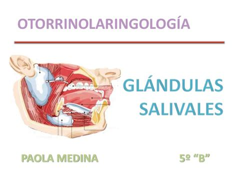 glandula submaxilar anatomia glandula submaxilar anatomia newhairstylesformen2014 com
